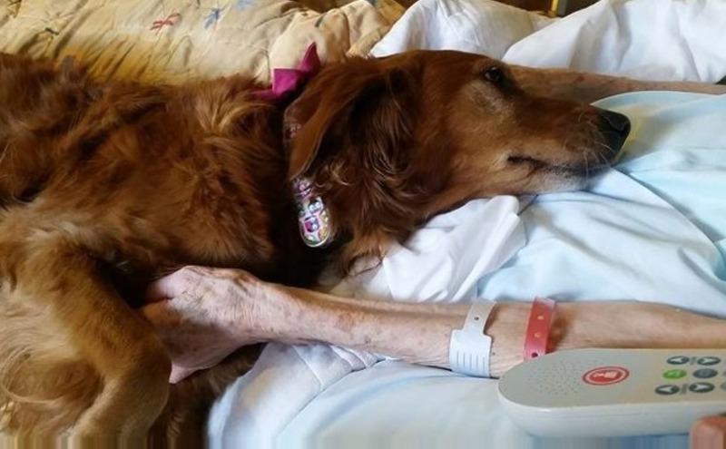 hospice-dog-3