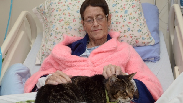 hospital-pet-visits-20151124