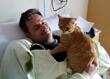 hospitalcat-440x315