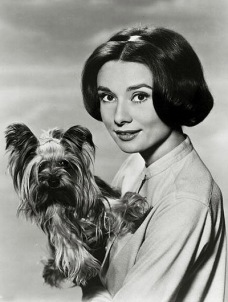"Stage and Screen. Personalities. pic: circa 1950's. Actress Audrey Hepburn, portrait, and dog. Audrey Hepburn, (1929-1993) born in Brussels, a truly international star from a cosmopolitan background, starred in many films, eg. ""My Fair Lady"" and ""Breakfas"